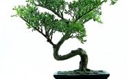 donde situar un bonsai de interiores